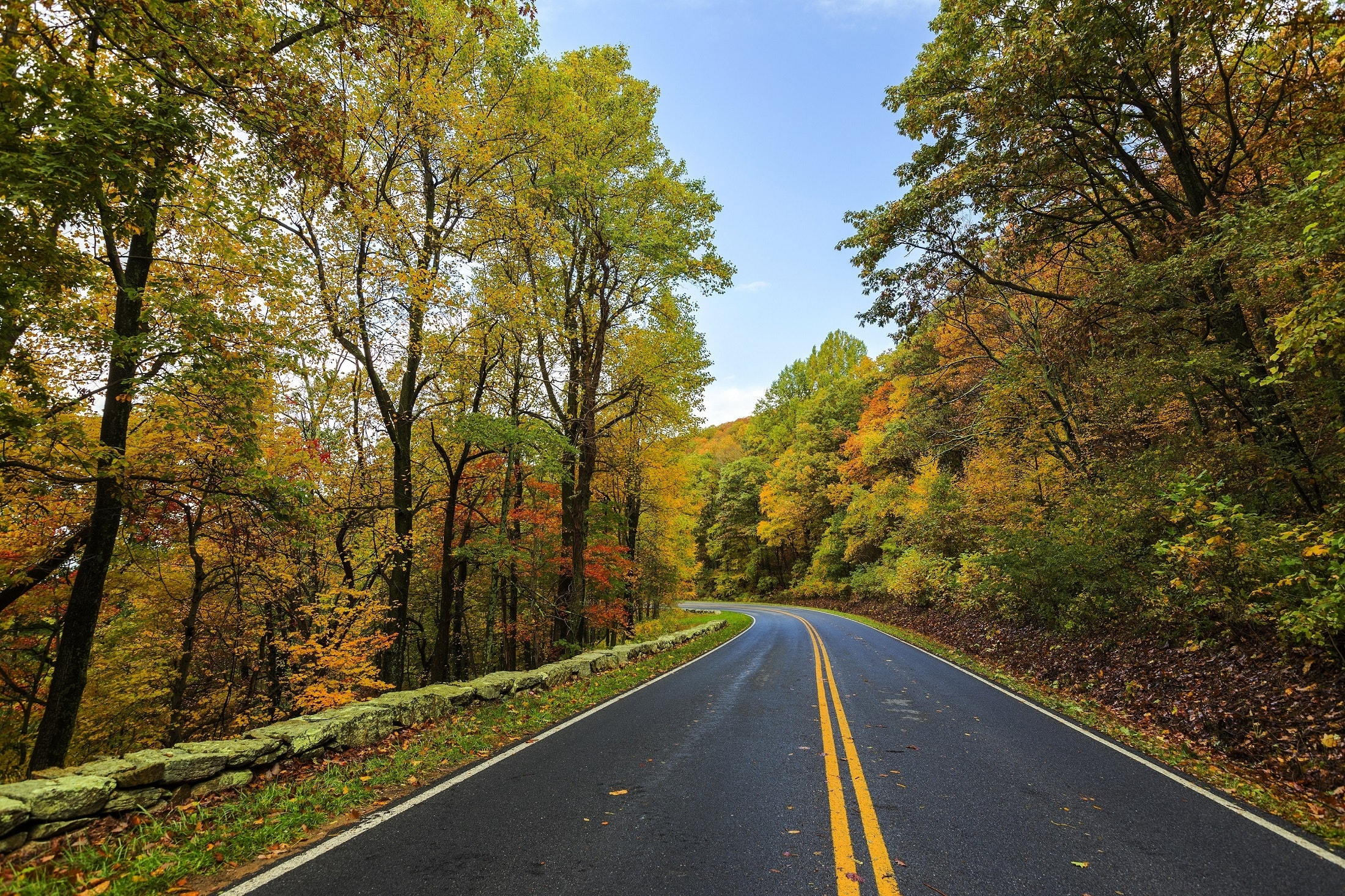 The road in the Fall